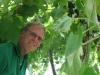 Dr. Paul Tabor in the St. Croix canopy