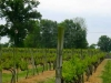 Two Oaks Vineyard, Benton, Illinois