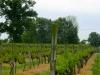 Two Oaks Vineyard, Benton, Illinois